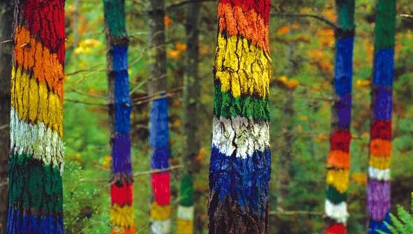 Hoteles en Bosques para andar y hacer rutas en bosques