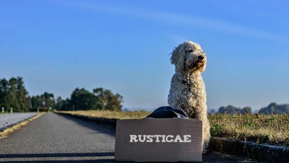 Pet-friendly Hotels and Dog-friendly Hotels Rusticae