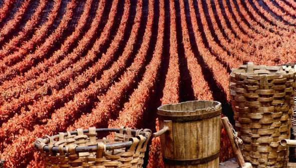 La Rioja Getaways winery getaways