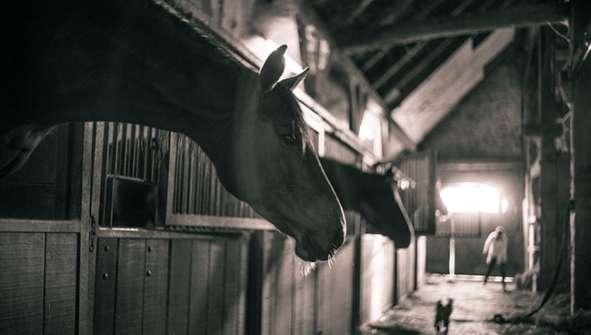 Montar a caballo, paseos a caballo, Hoteles con caballos