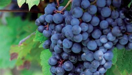 Castellón, lugar de vino