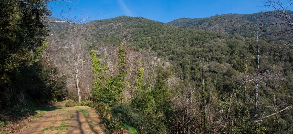 La Piconera Casa Rural Osor Girona Rusticae Campo5