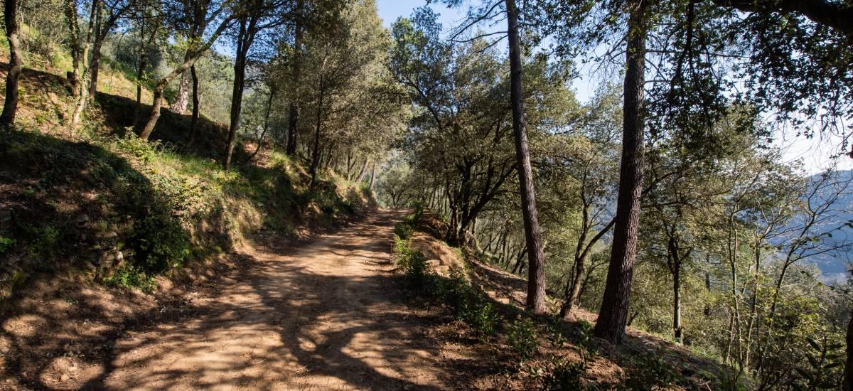 La Piconera Casa Rural Osor Girona Rusticae Campo6