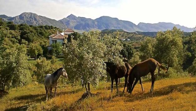 Cortijo La Cañada del Sacristán