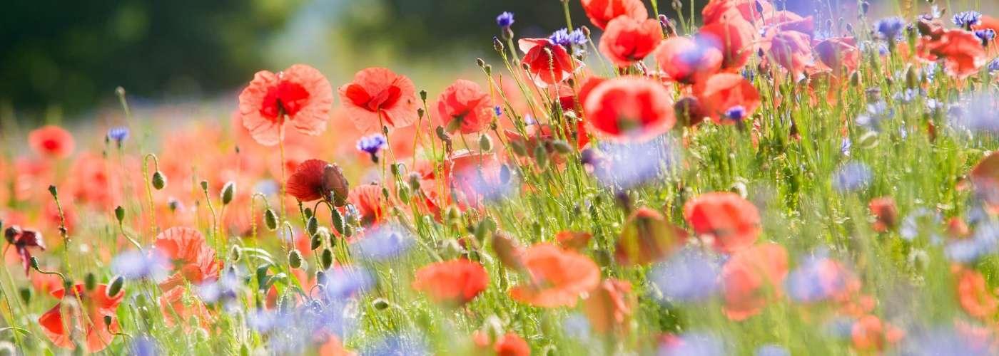 Paisaje de flores -paseos cerca de hoteles Rusticae