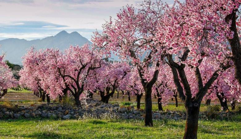 Las floraciones más espectaculares