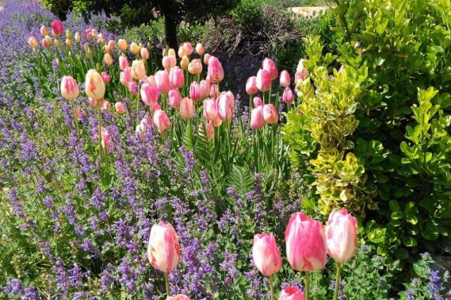 Jardines floridos en Cuesta de Patas (Cuenca)