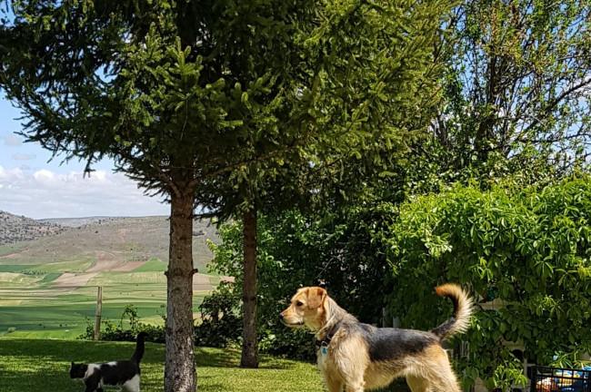 Una escapada Dogfriendly