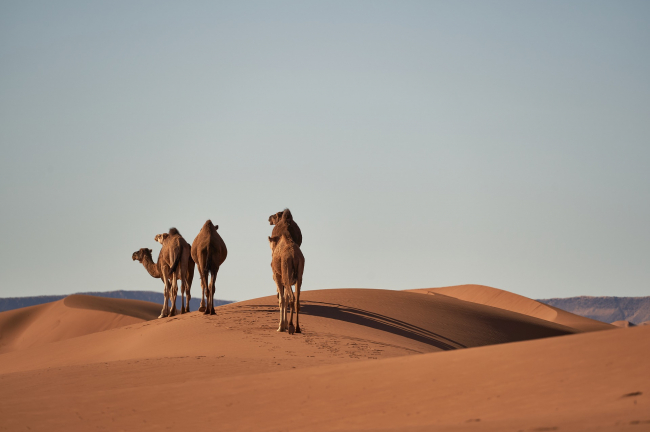Desierto del Sáhara y la Cordillera del Atlas