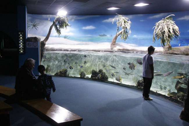 THE AQUARIUM OF GIJÓN: SUBERMERGE IN THE UNDER WATER WORLD!