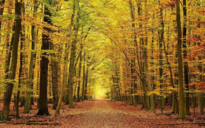 Escapadas a Navarra rurales  -Escapada a Bosque de Irati