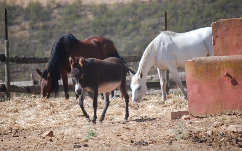 Escapada Rural con caballos y corzos en Extremadura Las Tejuelas