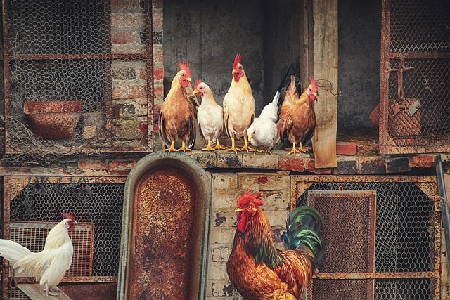 <strong>Hoteles y Casas Rurales con gallinero propio y huevos ecológicos</strong>