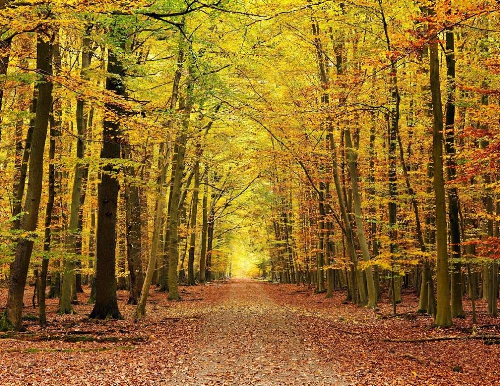 <strong>Escapadas a Parques Naturales de Navarra</strong>