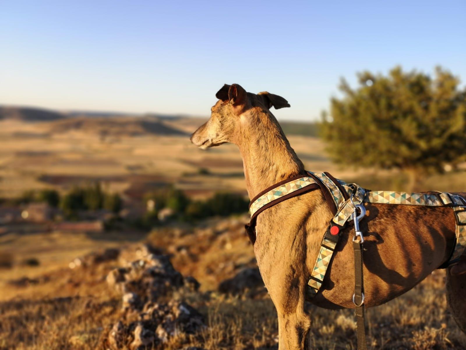 Hotel que admiten perros y mascotas Cardamomo Sigüenza