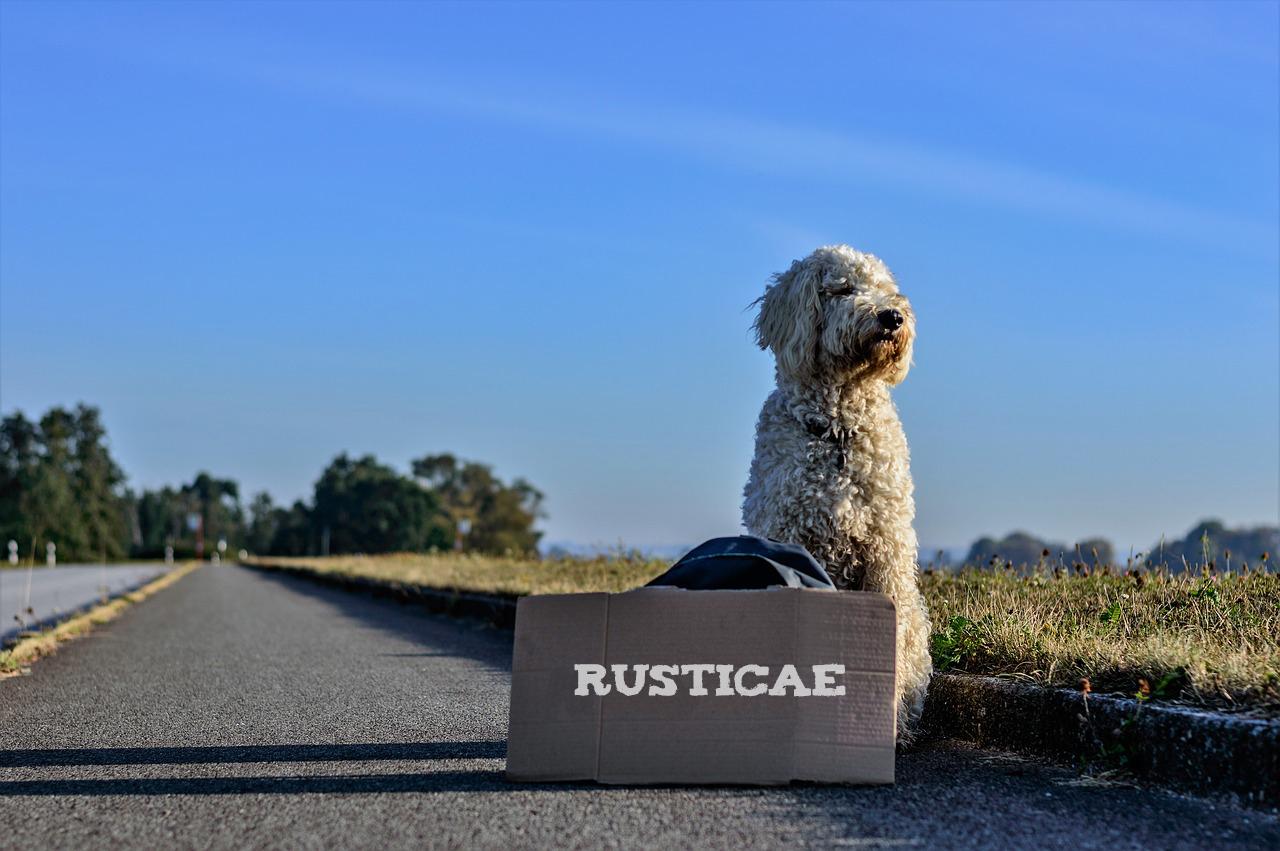Hoteles que admiten mascotas y que admiten perros