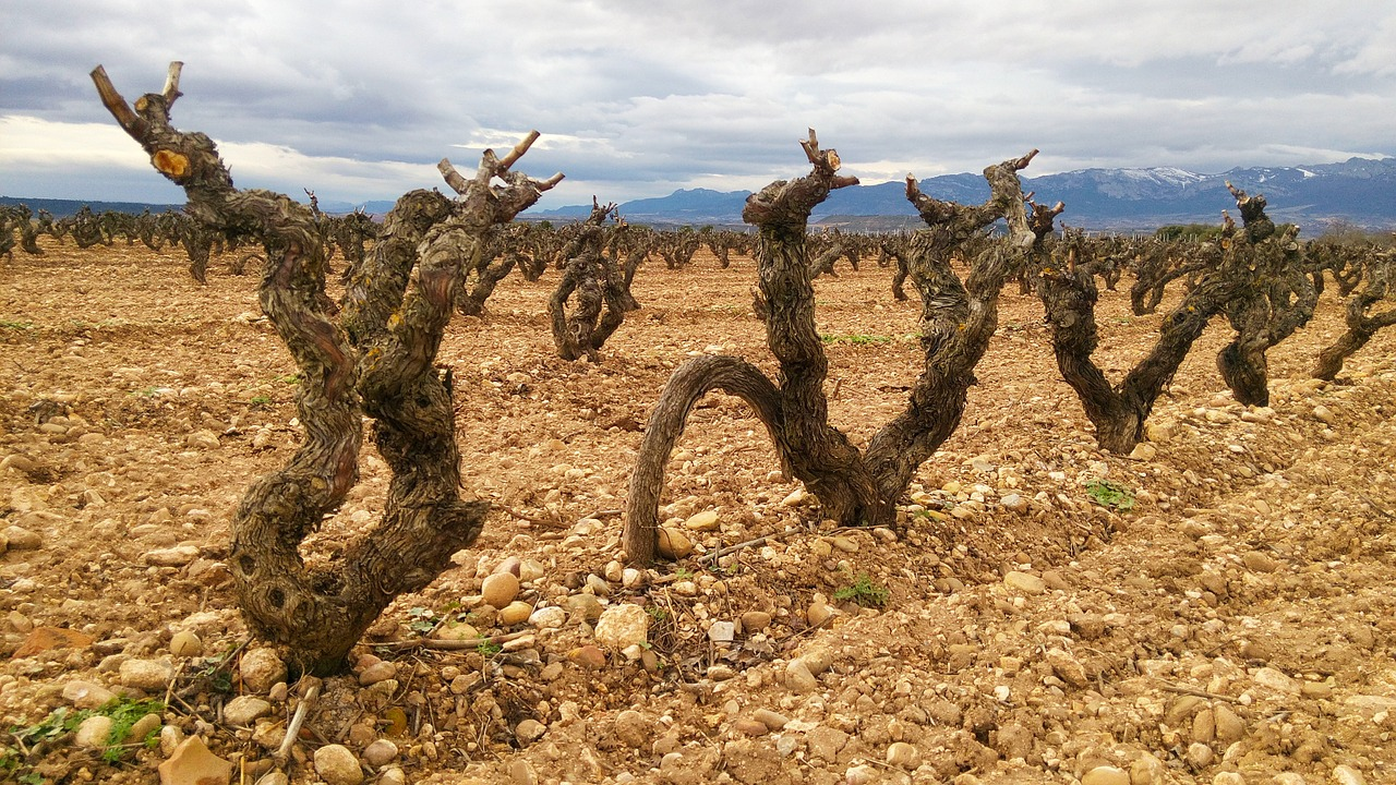 <strong>Wine getaways to La Rioja</strong>