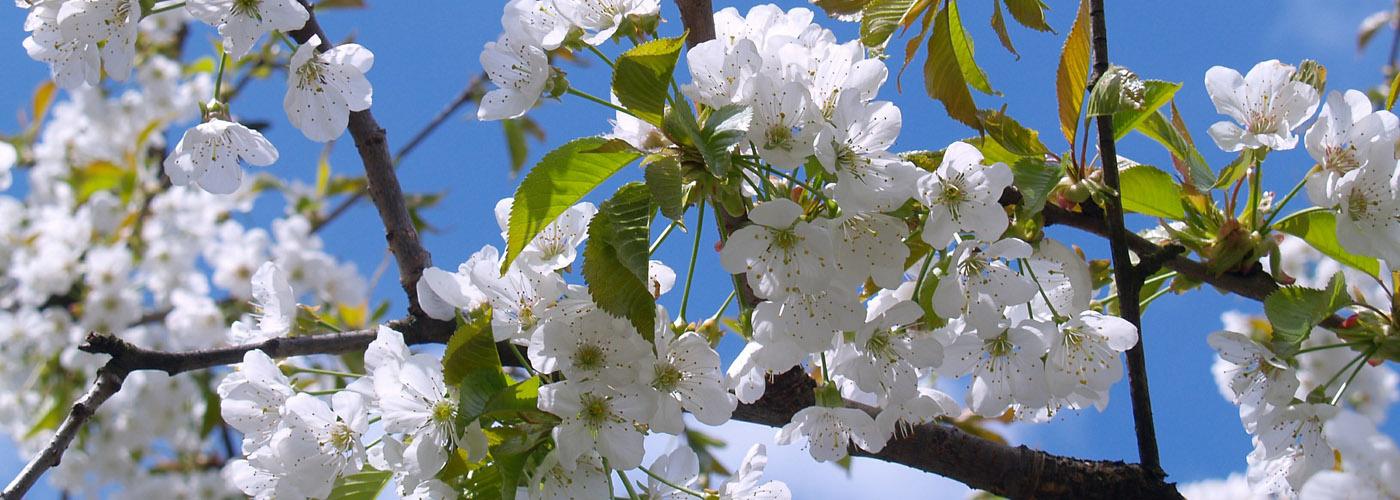Marzo en Flor