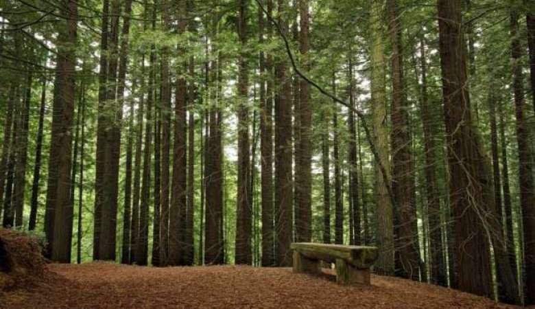 Regalo Rusticae Bosques Encantados-4